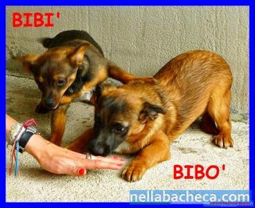 BIBI' E BIBO' cucciolotti insieme per caso