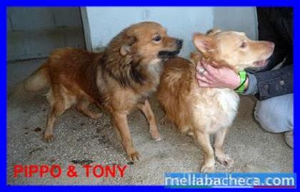PIPPO E TONY il loro appello gira da molto ma nessuna richiesta