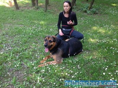 RUBEN, incrocio Rottweiler-Pastore Tedesco
