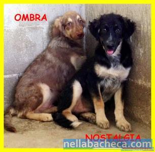 OMBRA E NOSTALGIA urgente cuccioli 5 mesi terrorizzati