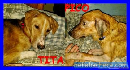 TITA E PIKO stanno meglio ma cercano ancora casa