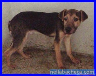 CACTUS cucciolone 1 anno e mezzo in canile dalla nascita