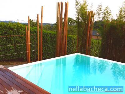 Canne di bambù, bamboo diametri dai 2 ai 10 cm vendesi.