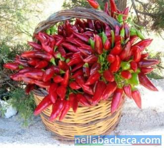 Peperoncino piccante della Calabria di fresco raccolto