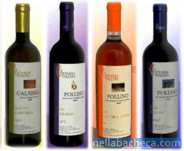 Vini Dop Terre di Cosenza – Sottozona Pollino